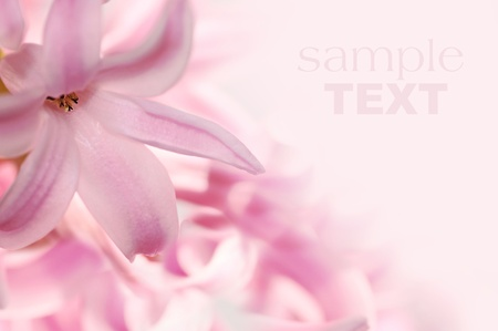 small flowers: beautiful pink flowers made with color filters