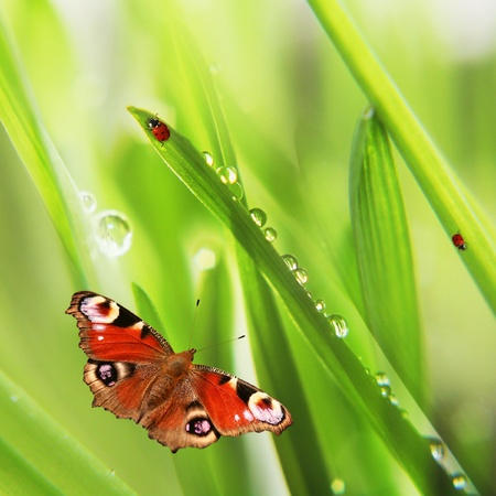 dew: background of spring grass and butterfly  Stock Photo