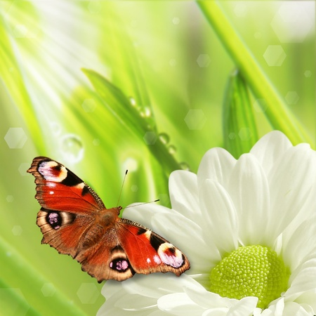 background of spring grass and butterfly  photo
