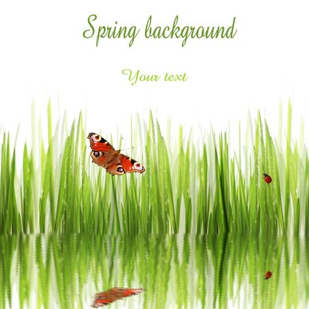 background of spring grass and butterfly Stock Photo - 13152127