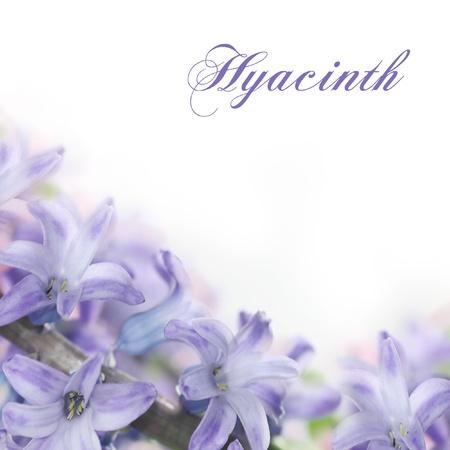fleurs bleues floues faites avec des filtres roses Banque d'images