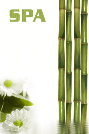 Spa still life with flowers and bamboo  Stock Photo - 13179467