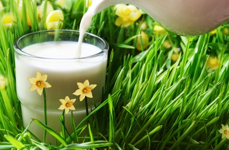 milk, grass and flower  Stock Photo - 13179496