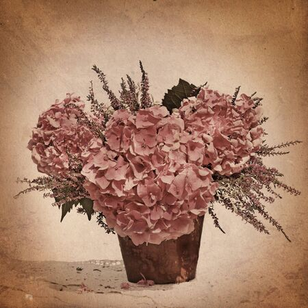 hydrangea in sepia photo