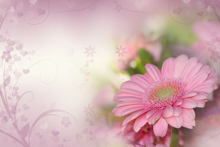 red gerber daisy:  gerber flowers