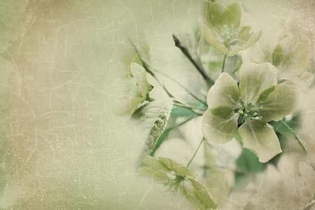 apple blossom: flowers to apple trees