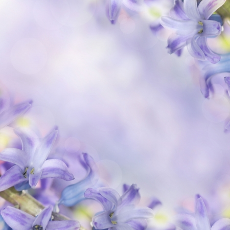 beautiful flowers made with color filters  Archivio Fotografico