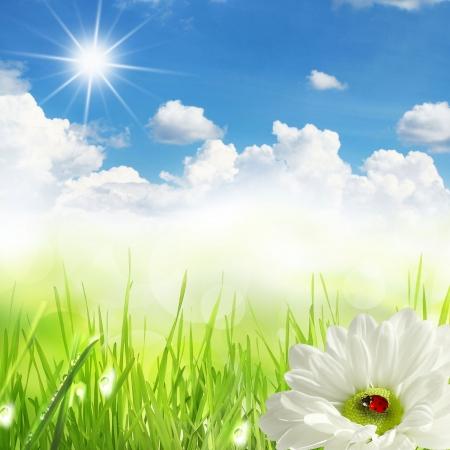 arri�re-plan de la ros�e du matin sur une herbe de printemps
