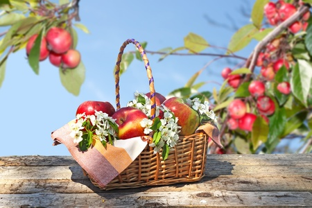 basket with fresh apple  photo
