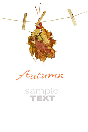 autumn leaves hanged on the clothesline isolated on white background  photo