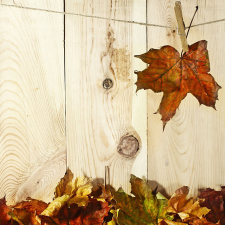 autumn leaves hanged on the clothesline  photo