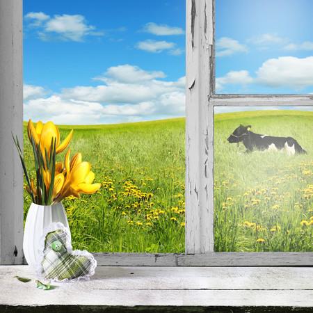 country: Lentebloemen gazon en groene bomen gezien door de oude venster. Stockfoto