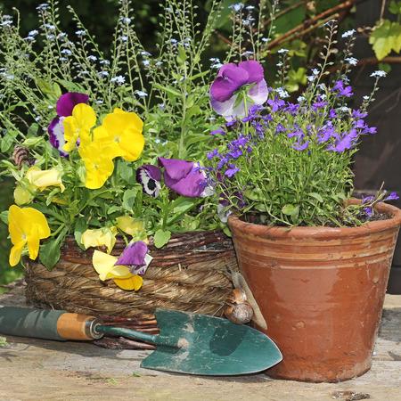 jardineras: Primavera de flores y jardineras. Foto de archivo