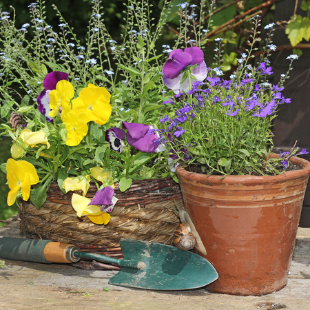 planters: Spring flowers and planters.