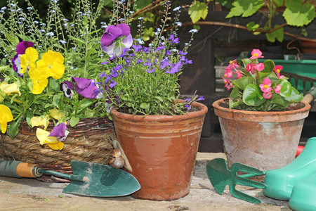 Spring flowers and planters.  photo