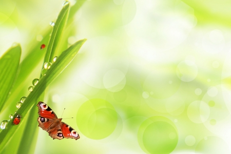Fresh morning dew on a spring grass and little ladybug, natural background - close up with shallow DOF.  Archivio Fotografico