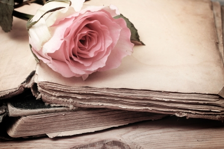 pink rose on an old book (vintage)  photo