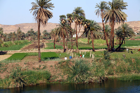 nile: A Typical view of the riverside of the river
