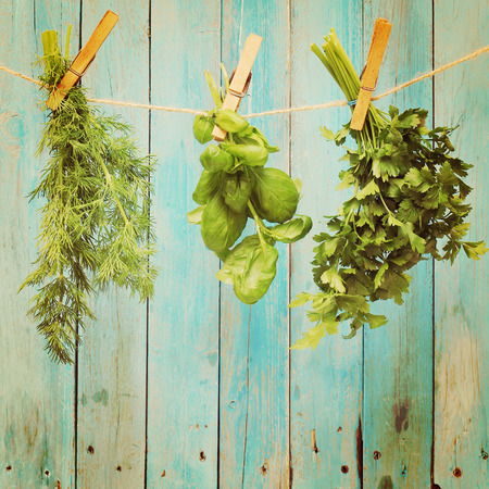 woodruff: Assorted hanging Herbs on an old and vintage wooden blue