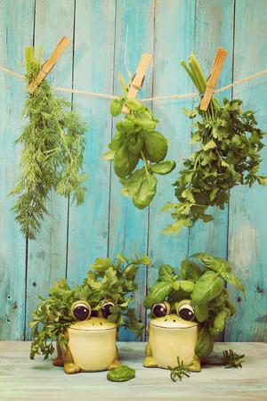 Herbes suspendus assortis sur un vieux et vintage en bois bleu Banque d'images
