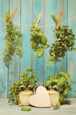 Assorted hanging Herbs on an old and vintage wooden blue photo