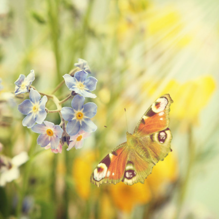 lightness: retro wildflowers background with butterfly