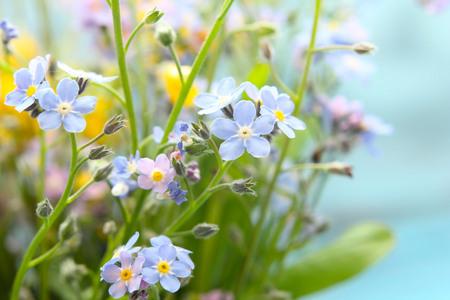 macro photo: retro wildflowers background