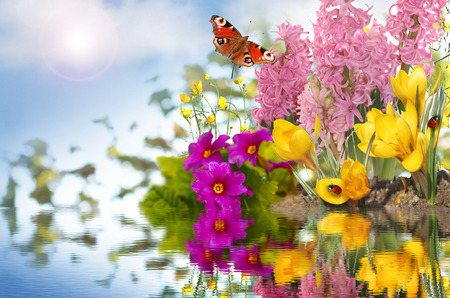 spring flowers background photo