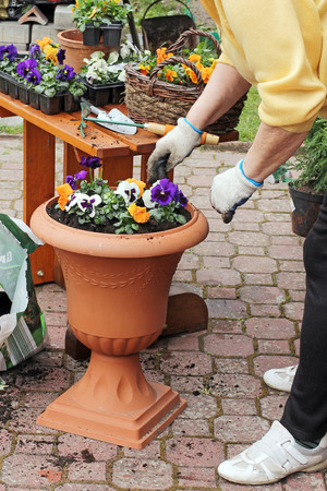 potting: Spring in the garden, potting flowers Stock Photo