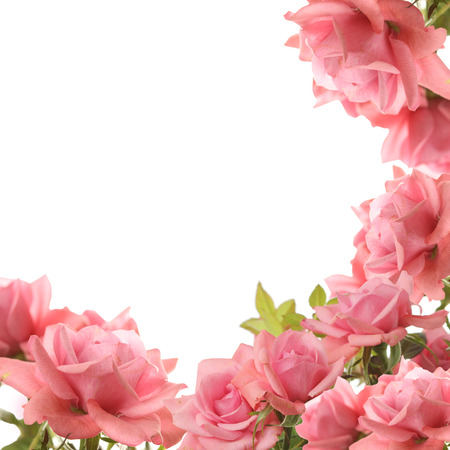 Rose Stock Photo - 38612548