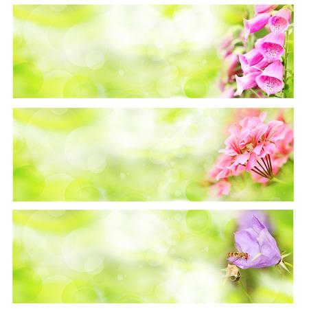 夏天花横幅