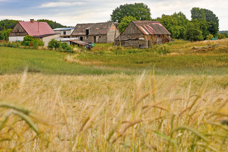 grain fields: Wheat field and the old farm Stock Photo
