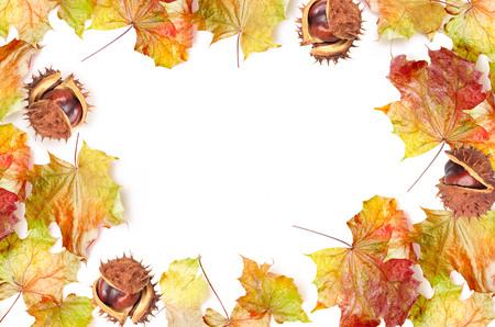 castaÑas: Marco de la frontera de hojas de colores otoñales y castaño sobre fondo blanco