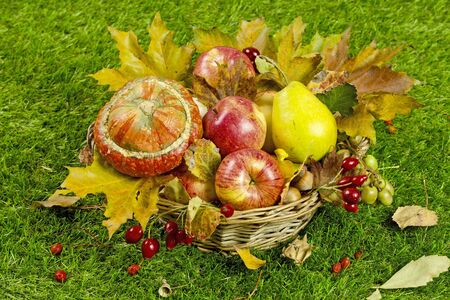 autumn garden: Autumn harvest in the garden. Apples and other fruits of autumn