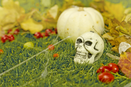 brainpan: Halloween background, pumpkin and  skull on the grass Stock Photo