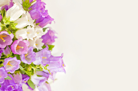 campanula: Beautiful flowers background with campanula bouquet. Stock Photo