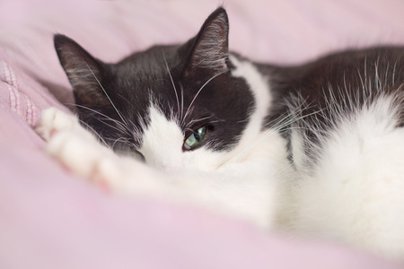 playful: Lazy cat sleeping on the bed Stock Photo