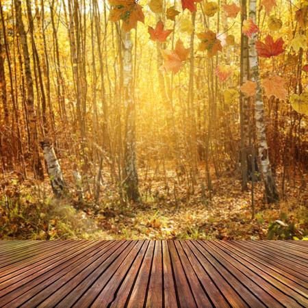 old wallpaper: Autumn background