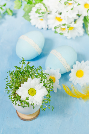 Camomile in eggs shell. Shallow depth of field, focus on near flower. Easter concept