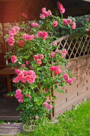 wooden gazebo with roses