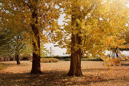 autumn in Gdynia Orlowo