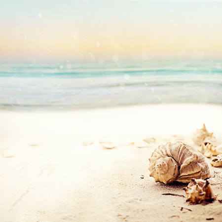 Summer holiday frame with seashells