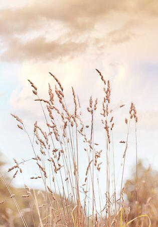Backgound of wild flowers and grass Stok Fotoğraf