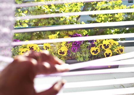 Many colorful pansies in the balcony window