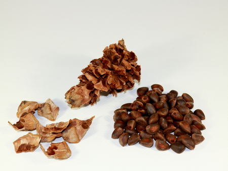 Set of husked hull cedar cones, resinous wooden scales from pine cones and pine nuts of Siberian cedar on a white background.