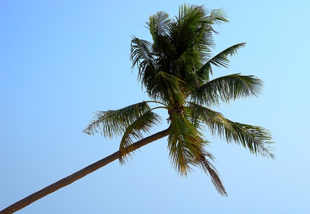 Coconut palm tree on bright blue sky background. Perfect tourism backdrop for advertising exotic resorts and vacation in tropical beach Imagens