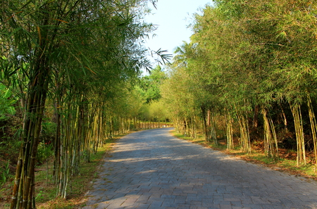 Empty road from paving stones through a bamboo alley on a hot summer day. Background for design postcard or poster with copy space