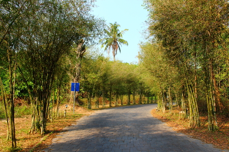 Empty road from paving stones along a tropical bamboo alley on a hot sunny day. Background for design postcard or poster with copy space Stockfoto