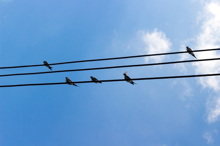 Swallows or birds sitting on electric cables against blue sky background.