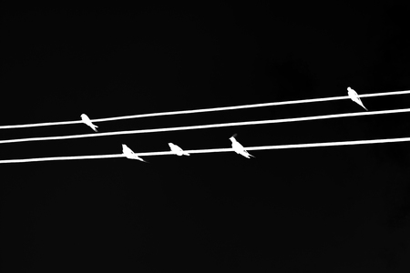 White silhouette swallows or birds sitting on electric wires on black background. Negative color effect.
